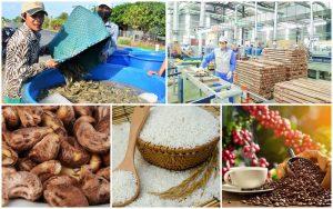 Nông sản Việt mất lợi thế cạnh tranh vì chi phí logistics quá cao